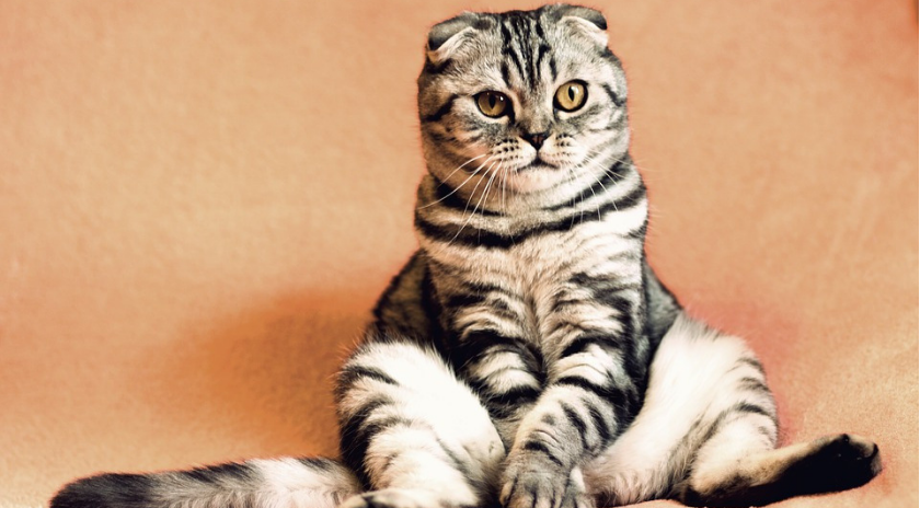 cuidar a tu mascota-gato